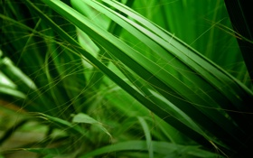 Картинка трава, природа, фон, болото, зелёный, макро фото