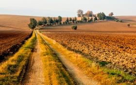 Картинка дорога, поле, небо, деревья, дом, Италия