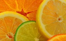 Обои макро, лимон, апельсин, долька, лайм, цитрус, фрукты