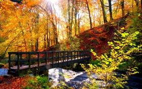 Картинка лес, деревья, пейзаж, Природа, forest, river, trees