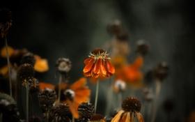Картинка макро, цветы, природа, растения, лепестки
