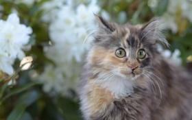 Картинка кошка, кот, усы, взгляд