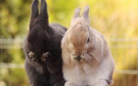 Обои животные, лапки, зайцы