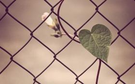 Обои сердце, ограда, проволка