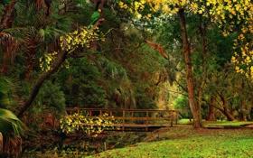 Картинка пруд, трава, птицы, листья, попугай, кусты, деревья