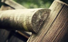 Картинка макро, дерево, пень, фокус, пни, бревно, древесина
