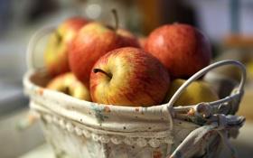 Обои корзина, яблоки, макро