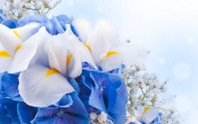 Обои цветы, white, цветение, blue, blossom, flowers
