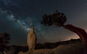 Картинка звезды, ночь, скала, дерево, Калифорния, США, Joshua Trees National Park