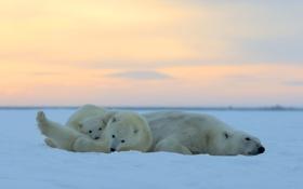 Обои закат, дети, отдых, Аляска, мать, Белые медведи, ледяная пустыня