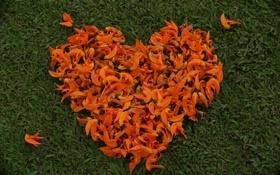 Картинка любовь, сердце, лепестки, сердечко