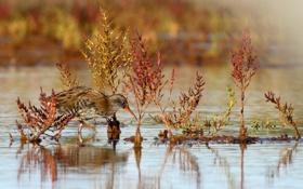 Картинка вода, птица, растение, перья, клюв