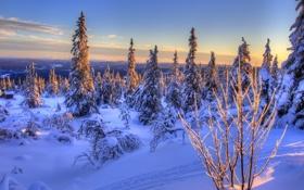 Обои Норвегия, Norway, снег, зима, ели
