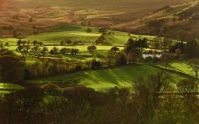 Картинка поле, трава, деревья, дом, холмы