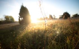 Обои природа, паутина, поле, деревья