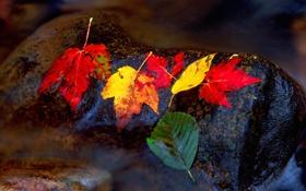 Картинка осень, листья, вода, природа, ручей, камень