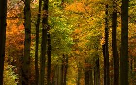 Обои осень, деревья, природа, фото, леса, парки, осенние обои