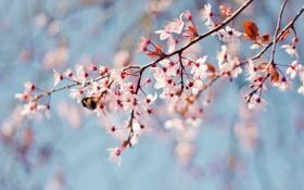 Обои ветки, пчела, дерево, весна