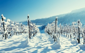 Обои зима, лес, снег, горы, пейзажи, деревня, виноградник