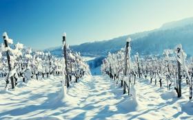 Картинка зима, лес, снег, горы, пейзажи, деревня, виноградник