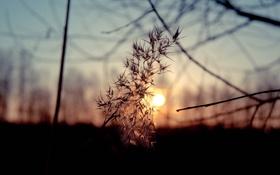 Обои небо, солнце, природа, Закат