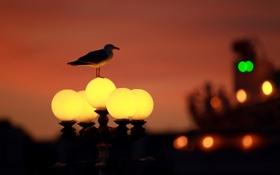 Обои свет, город, огни, Англия, чайка, фонарь, боке