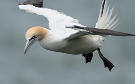 Картинка птицы, птица, полёт