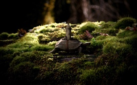 Картинка трава, макро, природа, дом, лодка, черепаха