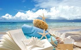 Обои звезды, wood, starfishes, sand, песок, ракушки, пляж