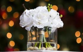 Обои цветы, розы, ваза, камушки