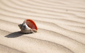 Картинка песок, лето, ракушка