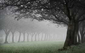 Обои трава, деревья, природа, дерево, дымка, аллея, леса