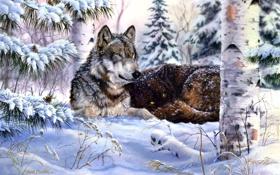 Картинка зима, лес, снег, ель, волки, живопись, шишки