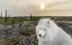 Обои взгляд, морда, природа, собака