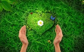 Обои трава, сердце, руки