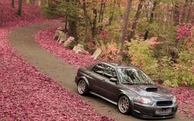Картинка дорога, листья, деревья, Subaru, Impreza, WRX, front