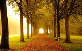 Обои дорога, осень, листья, деревья, скамейка, туман, парк