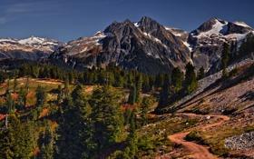 Картинка дорога, деревья, Горы, Канада, фотограф Иван Андреевич