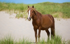 Картинка песок, морда, лошадь, трава, конь