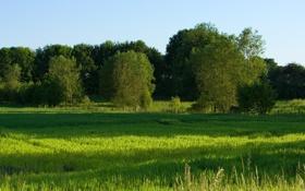 Обои трава, солнце, деревья, пейзаж, природа, листва, тени
