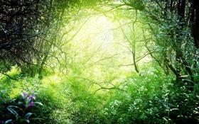 Обои Природа, Лес, Зеленый, Свет, Light, Красиво, Nature