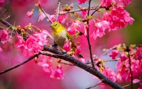 Обои цветы, дерево, птица, bird, flowers