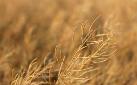 Обои макро, природа, фон, золото, растение, растения