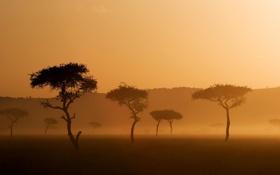 Обои деревья, природа, туман, фото, пейзажи