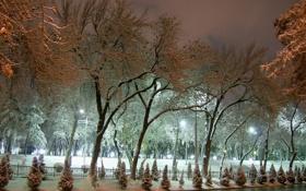 Обои зима, иней, свет, снег, деревья, улица, елка