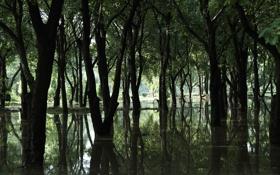 Обои лес, вода, природа, обои, wallpaper, wall, nature