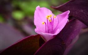 Картинка flower, nature, macro