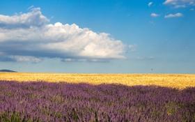 Обои поле, небо, облака, ферма, лаванда