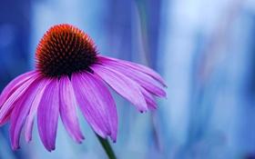 Обои цветок, сиреневый, лепестки