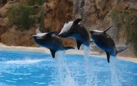 Картинка вода, брызги, прыжок, дельфины